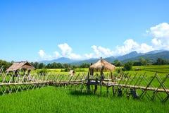 Giacimento verde del riso con la capanna tailandese immagini stock