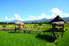 Giacimento verde del riso con la capanna tailandese Fotografia Stock