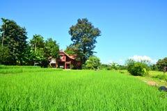 Giacimento verde del riso con la casa di legno tailandese fotografie stock