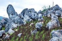Giacimento verde del riso con le belle rocce sulle montagne Fotografia Stock Libera da Diritti