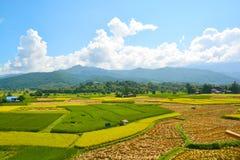 Giacimento verde del riso del paesaggio immagini stock libere da diritti