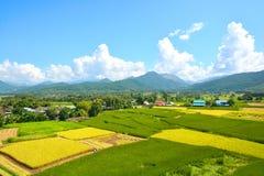Giacimento verde del riso del paesaggio fotografie stock libere da diritti