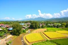 Giacimento verde del riso del paesaggio fotografia stock libera da diritti