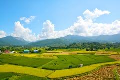 Giacimento verde del riso del paesaggio fotografia stock