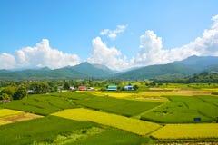 Giacimento verde del riso del paesaggio con la montagna immagine stock libera da diritti