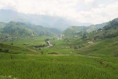Giacimento verde del riso di agricoltura e riso a terrazze sulla montagna Fotografie Stock
