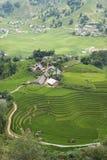 Giacimento verde del riso di agricoltura e riso a terrazze sulla montagna Immagini Stock
