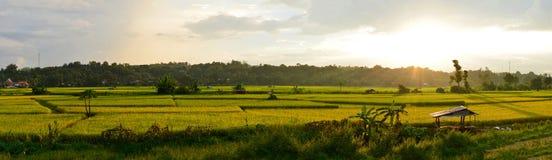 Giacimento verde del riso di panorama con la montagna fotografia stock libera da diritti