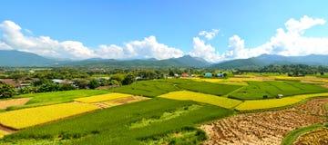 Giacimento verde del riso di panorama con la montagna fotografia stock