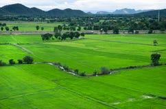 Giacimento verde del riso a Kanchanaburi, Tailandia Immagini Stock Libere da Diritti
