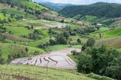giacimento verde del riso sul terrazzo in valle della montagna Bella natura Fotografia Stock Libera da Diritti