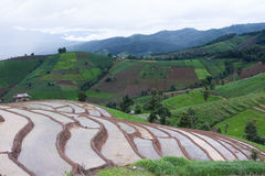 giacimento verde del riso sul terrazzo in valle della montagna Bella natura Fotografia Stock