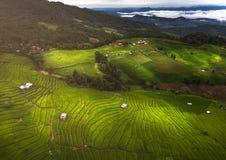 Giacimento verde del riso sulla montagna con nebbia in Chiang Mai Fotografia Stock Libera da Diritti