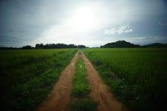 Giacimento verde del riso in Tailandia del Nord fotografie stock