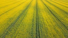 Giacimento verde del seme di ravizzone, vista aerea del paesaggio della campagna di agricoltura Giacimento verde del seme di ravi Fotografia Stock Libera da Diritti