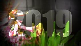 Giacinthe sbocciante nel fondo bianco archivi video