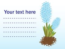 Giacinti del blu dei fiori freschi Cartolina d'auguri Fotografie Stock
