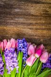 Giacinti e tulipani fotografia stock