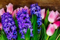 Giacinti e tulipani fotografia stock libera da diritti