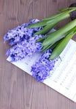 Giacinto blu con lo strato della nota Fotografie Stock