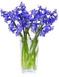 Giacinto del fiore immagine stock