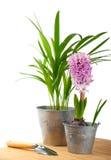 Giacinto e pianta tropicale Immagine Stock Libera da Diritti