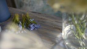 Giacinto porpora del fiore sulla tavola del fiorista video d archivio
