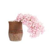 Giacinto rosa in vaso dell'argilla, isolato sopra bianco fotografia stock