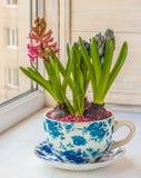 Giacinto in un vaso con un picchiettio d'annata immagini stock