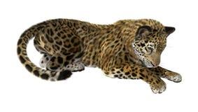 Giaguaro del grande gatto Immagine Stock Libera da Diritti