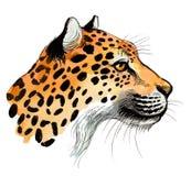 Giaguaro dell'acquerello Fotografia Stock Libera da Diritti