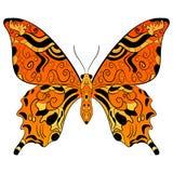 Giallo arancio della farfalla di monarca e colore del nero Fotografia Stock Libera da Diritti