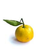 Giallo arancione Fotografia Stock