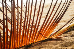 Giallo asciughi le foglie del ramo della palma Fotografia Stock Libera da Diritti