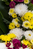 Giallo del crisantemo Fotografia Stock Libera da Diritti