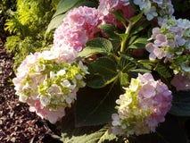 Giallo del fiore del fiore del fiore fotografie stock