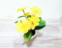 Giallo del fiore sul tamplate della tavola fotografia stock