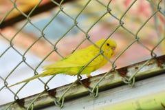 Giallo del pappagallo Fotografia Stock Libera da Diritti