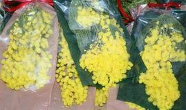 Giallo della mimosa per il giorno delle donne l'8 marzo Fotografie Stock