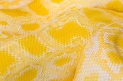 Giallo della pelle di serpente Fotografia Stock Libera da Diritti