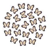 Giallo delle farfalle con il nero su fondo bianco Fotografie Stock