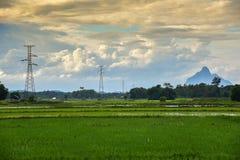 Giallo delle nuvole palo e del giacimento elettrici del riso Fotografie Stock
