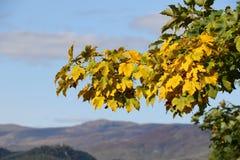 Giallo di autunno Immagini Stock Libere da Diritti