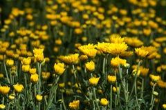 Giallo e fiori Immagini Stock
