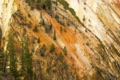 Giallo e pareti dell'oro del fiume Yellowstone nel Wyoming Fotografie Stock