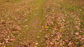 Giallo ed arancia lascia la finestra di salto su prato inglese verde nel parco di autunno stock footage