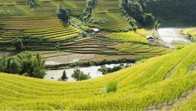 Giallo, inverdisca, viaggi, natura, il paesaggio, l'asiatico, l'etnia, rurale, il campo, la pianta, il paese, la valle, la montag Fotografia Stock