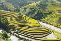 Giallo, inverdisca, viaggi, natura, il paesaggio, l'asiatico, l'etnia, rurale, il campo, la pianta, il paese, la valle, la montag Immagine Stock