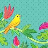 Giallo luminoso, piccolo uccello tropicale arancio della foresta Fotografia Stock