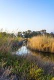 Gialova盐水湖, Messinia,希腊 免版税库存图片